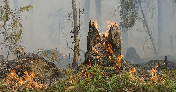Incendis a Vallbona de les Monges
